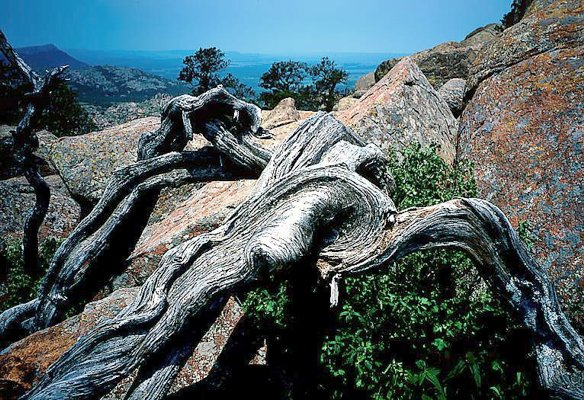 Picture of twisted wood and rocks - Wichita Mountains, Oklahoma.