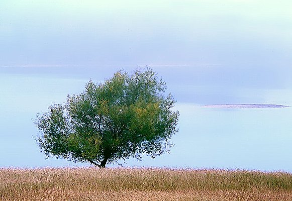 http://www.fwnp.com/willow-tree.jpg